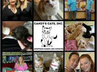 Candy's Cats, Inc.